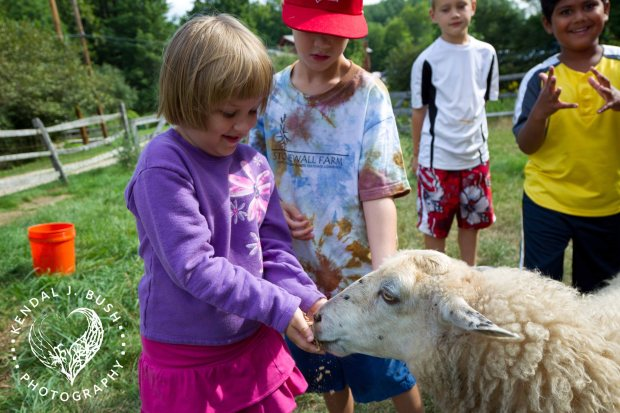girl-with-sheep